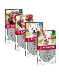 Antiparasitario Pipeta Advantix para Perros