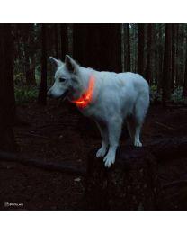 Collar de Luz con USB para Perros