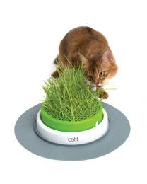 Germinador de Pasto Indoor para Gatos