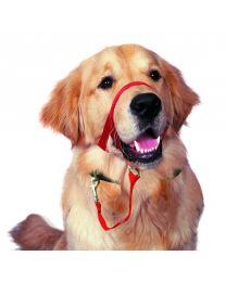 Cabestro HALTI para Perros
