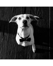 Humita para Perros
