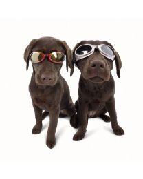"""Gafas de Sol """"Doggles ILS"""" con Filtro UV para Perros"""